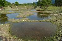 Juni 2013 Hochwasser in Rossatz_3